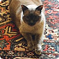 Adopt A Pet :: Mr. Mugatu - Novato, CA
