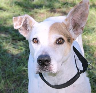 Terrier (Unknown Type, Small) Mix Dog for adoption in Loxahatchee, Florida - Kim