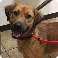 Adopt A Pet :: Brantley - Charlotte, NC