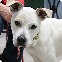 Adopt A Pet :: Sage - Elyria, OH
