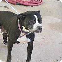 Adopt A Pet :: Zoe - Rocky Mount, NC