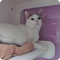 Adopt A Pet :: mr colors - Muskegon, MI