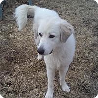 Adopt A Pet :: Ava (ADOPTED) - Trenton, NJ