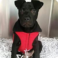 Adopt A Pet :: Camren **Adoption Pending** - Murfreesboro, NC