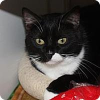 Adopt A Pet :: Dominette - St. Petersburg, FL