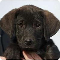 Adopt A Pet :: Ricky - Providence, RI