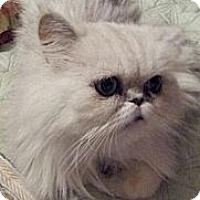Adopt A Pet :: Prince Monaco - Columbus, OH