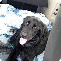 Adopt A Pet :: Tigger - Foster, RI