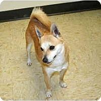 Adopt A Pet :: Peanut - Racine, WI