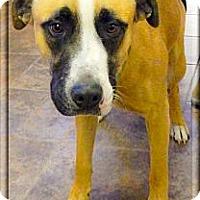 Adopt A Pet :: Bandit - Sacramento, CA