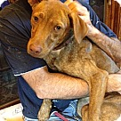 Adopt A Pet :: Penny - Sweet and Friendly!!