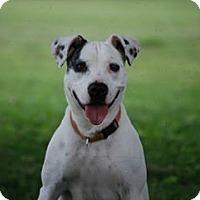 Adopt A Pet :: Saydee - Albany, NY