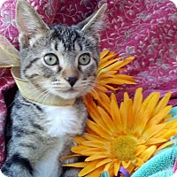 Adopt A Pet :: Paws - Scottsdale, AZ