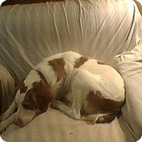 Adopt A Pet :: Kinsey - Albuquerque, NM
