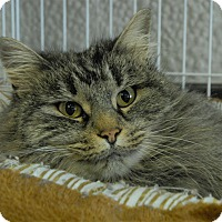 Adopt A Pet :: Tabitha - Winchendon, MA
