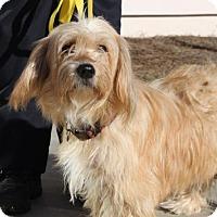 Adopt A Pet :: Bella - Washington, DC