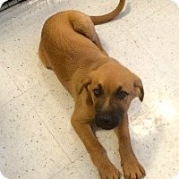 Adopt A Pet :: Perry in CT - Manchester, CT