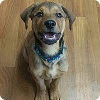 Adopt A Pet :: Hanson - Lisbon, OH