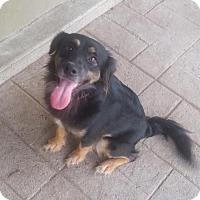 Adopt A Pet :: Bonnie - Aurora, CO