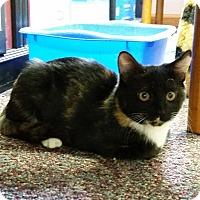 Adopt A Pet :: Tortie - Parkton, NC