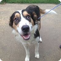 Border Collie Mix Dog for adoption in Summerville, South Carolina - Winston