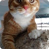 Adopt A Pet :: Blaze - Alamogordo, NM