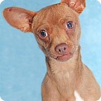 Adopt A Pet :: Clogs - Encinitas, CA