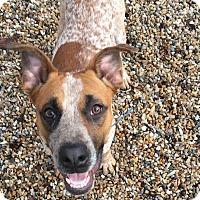 Adopt A Pet :: John - Middlebury, CT