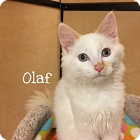 Adopt A Pet :: Olaf - Foothill Ranch, CA