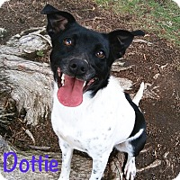 Adopt A Pet :: Dottie - El Cajon, CA