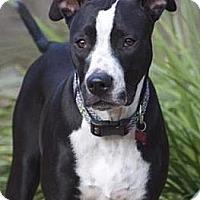 Adopt A Pet :: Quinn - Houston, TX