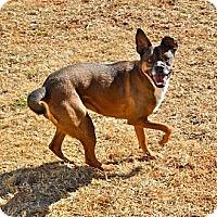 Adopt A Pet :: Sue - Marietta, GA
