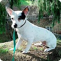 Adopt A Pet :: Popeye - Ferndale, WA