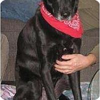 Adopt A Pet :: Rocky 2 - Rigaud, QC