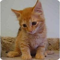 Adopt A Pet :: Sherbert - Modesto, CA