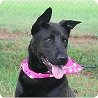 Adopt A Pet :: SADIE - Memphis, TN