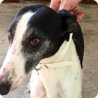 Adopt A Pet :: Karen - Pearl River, LA