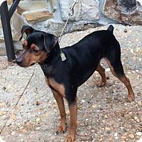 Adopt A Pet :: MAX - Paron, AR