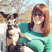 Adopt A Pet :: Peanut - Homewood, AL