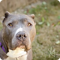 Adopt A Pet :: Daisy (foster) - Portland, OR