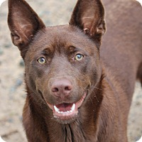 Adopt A Pet :: Mikah - Pinehurst, NC