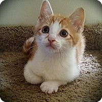 Adopt A Pet :: Tater Tot - Richmond, VA