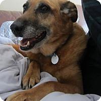 Adopt A Pet :: JENNY - Birmingham, MI