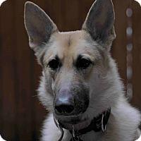 Adopt A Pet :: GINGER - Tully, NY