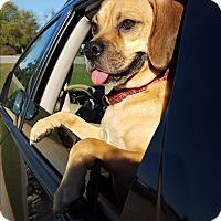 Adopt A Pet :: Bodie - Marietta, GA