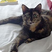 Adopt A Pet :: Toby - Nolensville, TN
