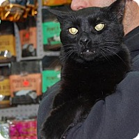 Adopt A Pet :: Panther - Brooklyn, NY
