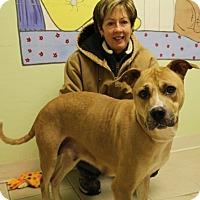 Adopt A Pet :: Cleo - Elyria, OH