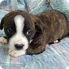 Adopt A Pet :: Gina! **FOSTER NEEDED**