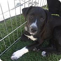 Adopt A Pet :: Cashew - Phoenix, AZ